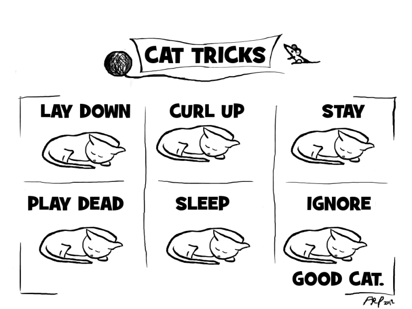 Cat tricks Lay down, curl up, sleep, play dead, stay, ignore, good cat